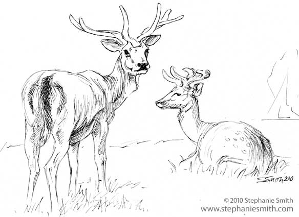 Resting Deer - sketchbook 2010