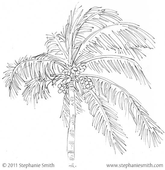Sketchbook: Single palm, Mexico 2011